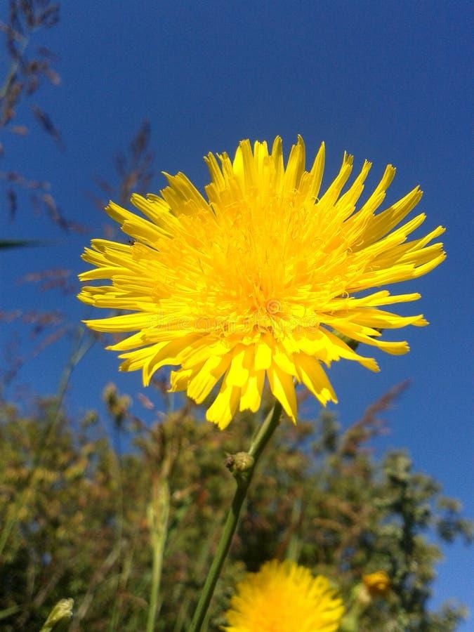Seria Dziki kwiat 5 obraz royalty free