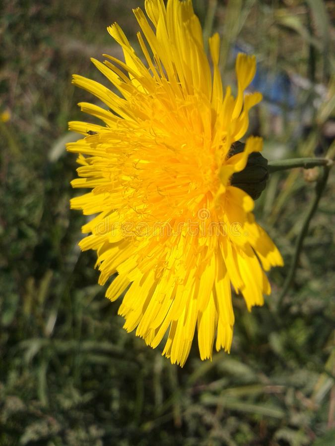 Seria Dziki kwiat obraz stock