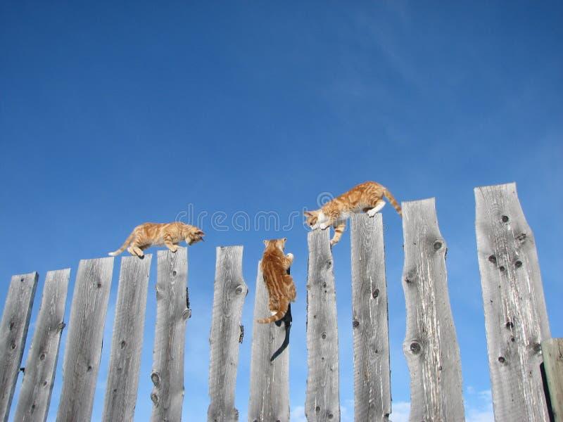 Serie #10 del camminatore del Ridge immagini stock libere da diritti