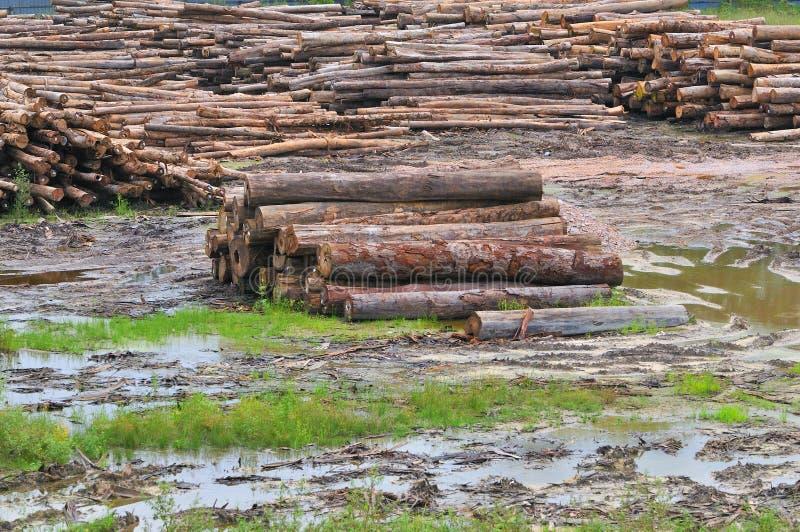 Serie 3 della segheria del legname fotografia stock libera da diritti