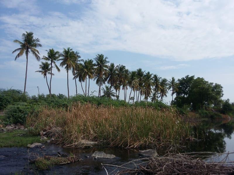 Serie av kokospalmen fotografering för bildbyråer