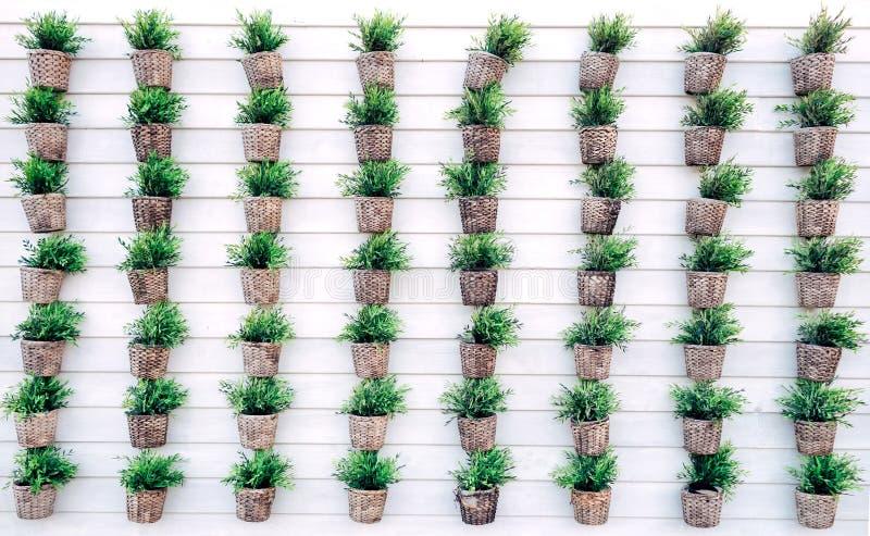 Serie av växten på den vita väggen royaltyfria foton