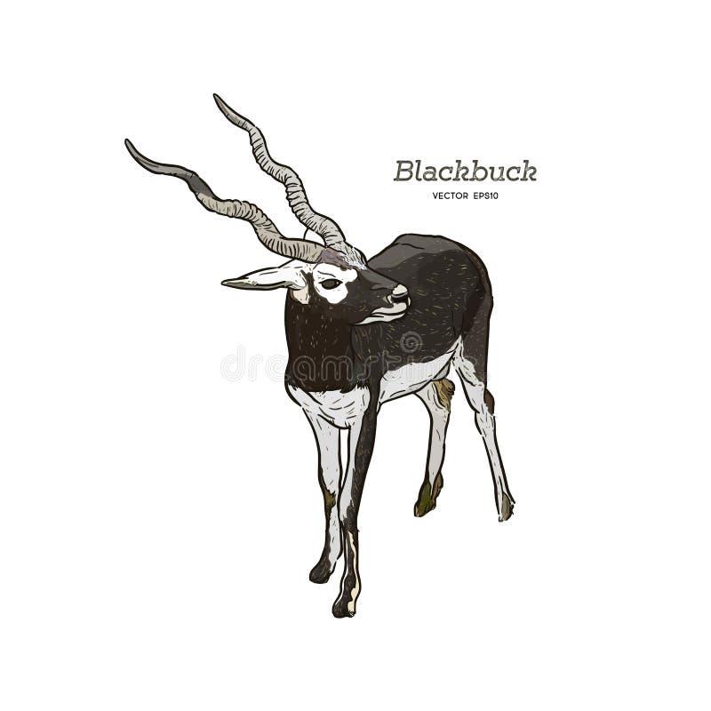 Serie Blackbuck - vettore dell'antilope royalty illustrazione gratis