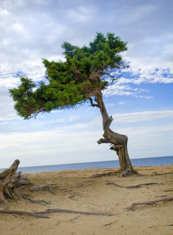 Serie d'Ibiza image libre de droits