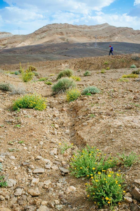 Serie de Holyland - viajero solitario de Ramon Crater Makhtesh- fotografía de archivo