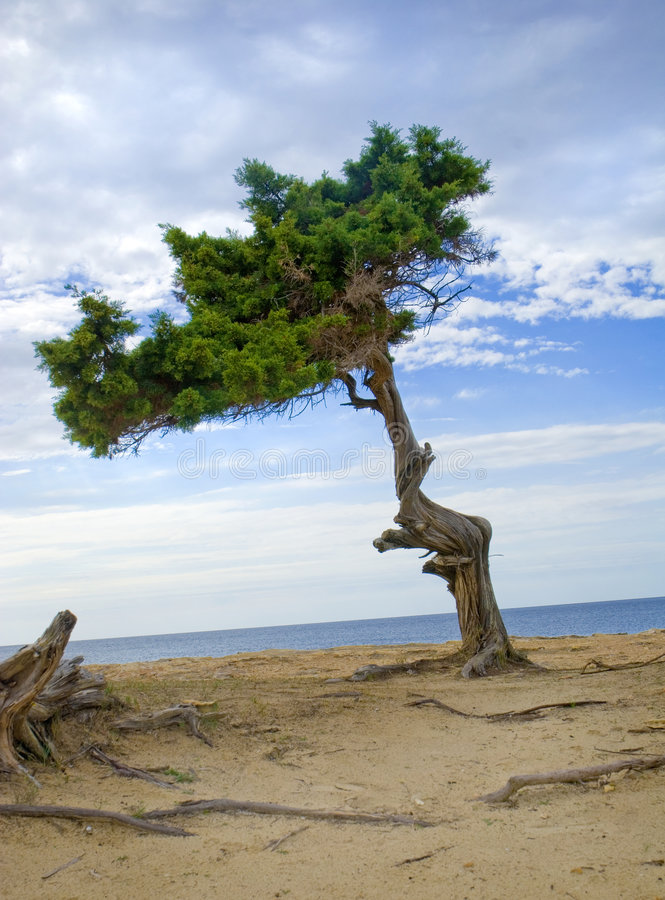 Serie de Ibiza imagen de archivo libre de regalías