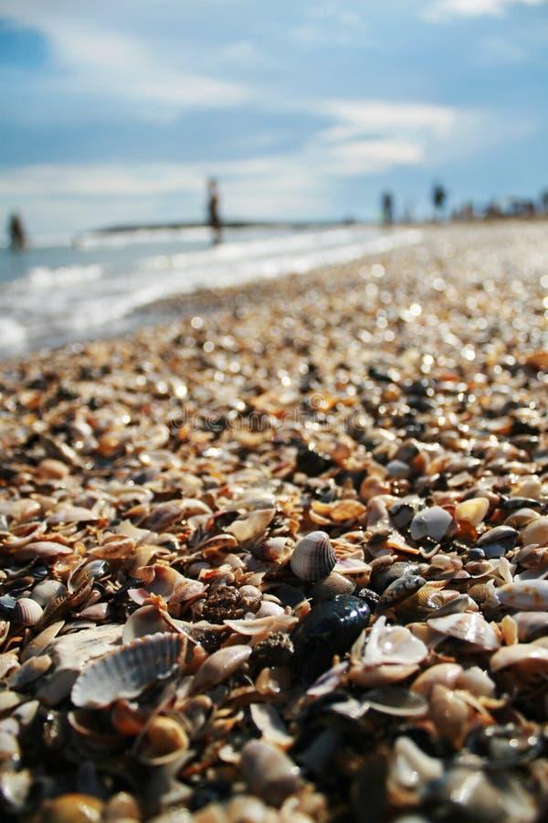 Serie de shelles en la playa por el mar fotografía de archivo libre de regalías
