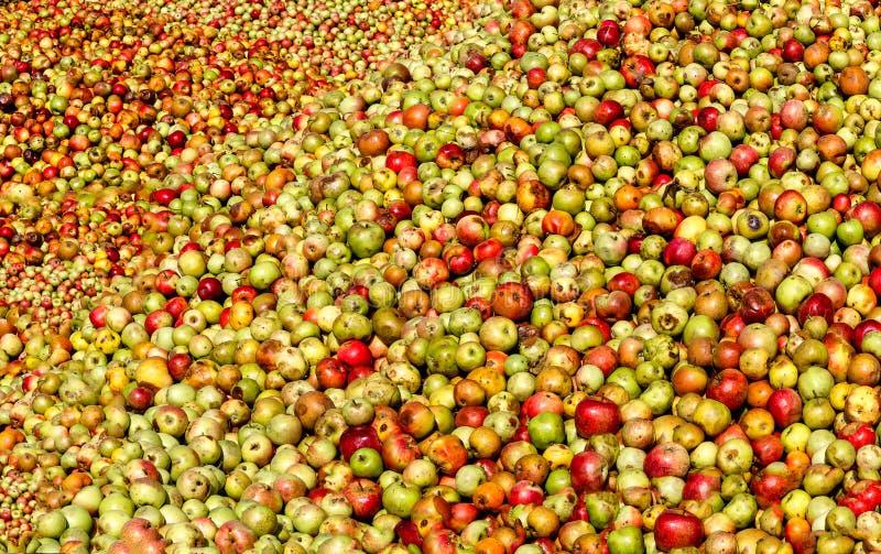 serie för äpplebakgrundsmat royaltyfria bilder