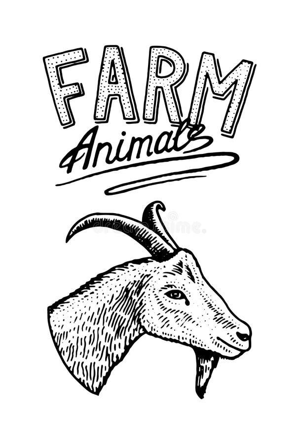 7 serie för illustration för djurtecknad filmlantgård Huvud av en inhemsk get Logo eller emblem för skylt symbol för menyn naturl vektor illustrationer