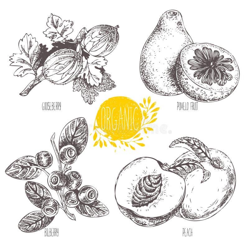 Serie - frutta, verdure e spezie di vettore illustrazione vettoriale