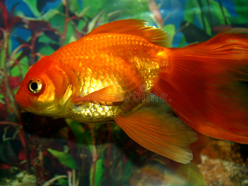 Serie II dei pesci fotografia stock