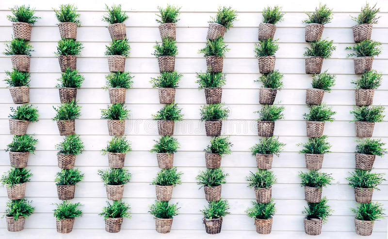 Serie of plant on white wall royalty free stock photos