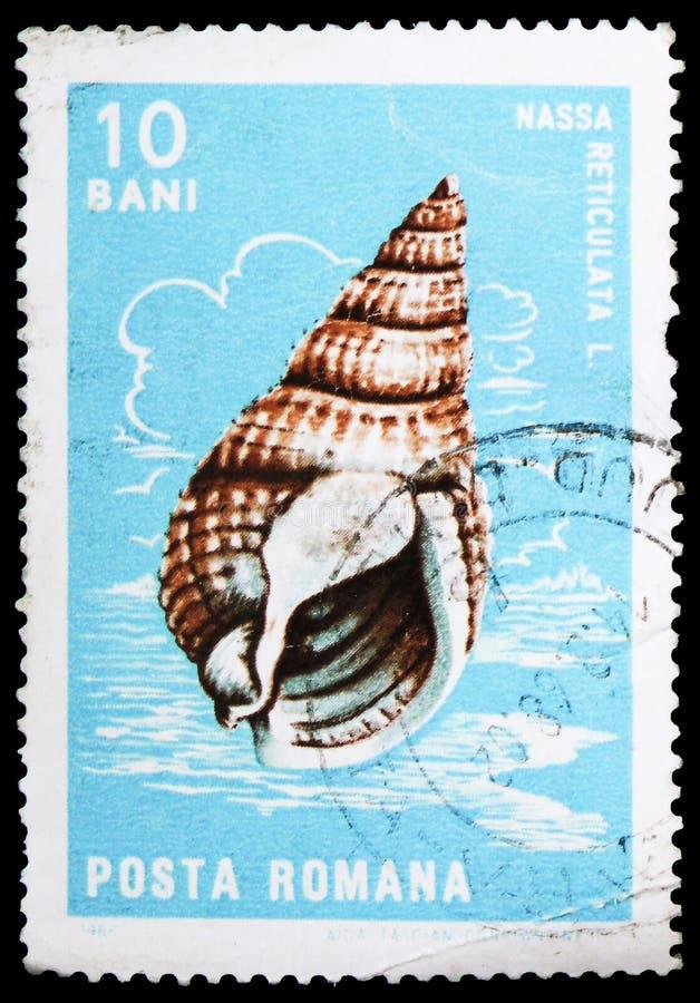 Serie reticolato di Dogwhelk (reticulata di Nassa), di crostacei e dei molluschi, circa 1966 immagine stock libera da diritti