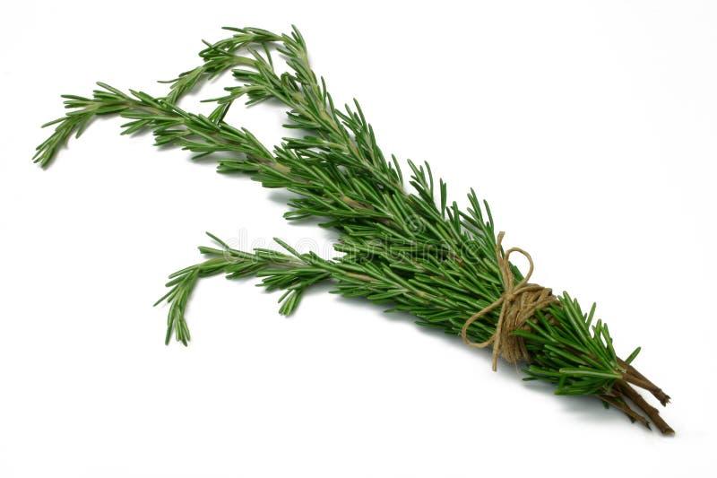 Serie Rosemary dell'erba immagini stock
