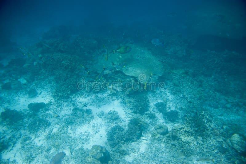 Serie ryba zdjęcia royalty free