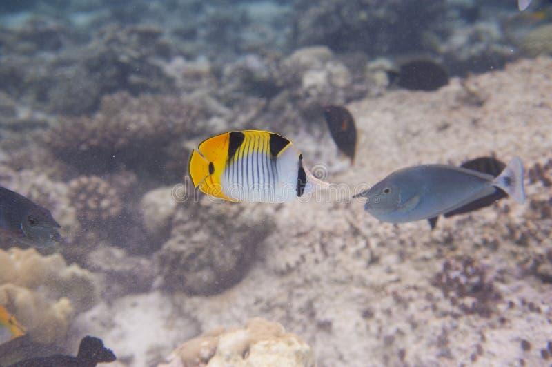 Serie ryba fotografia royalty free