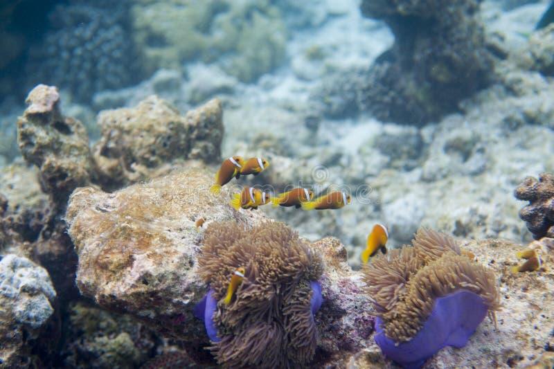 Serie ryba obrazy stock