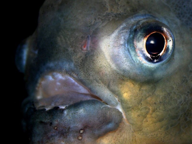 Serie VII de los pescados imagenes de archivo