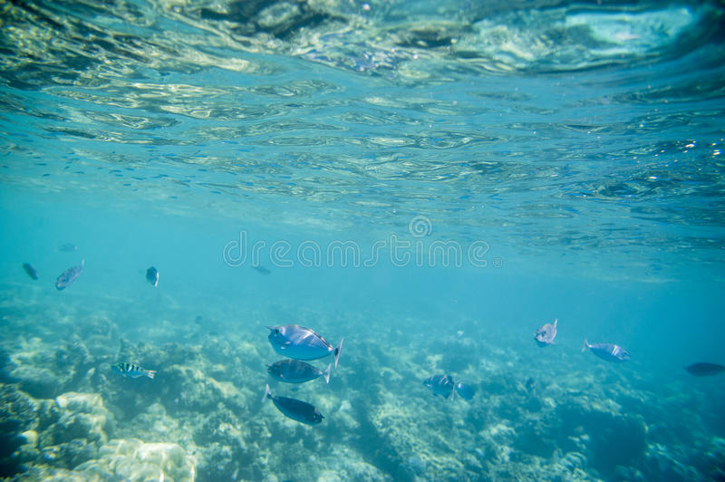 Series of fishes royalty free stock photos