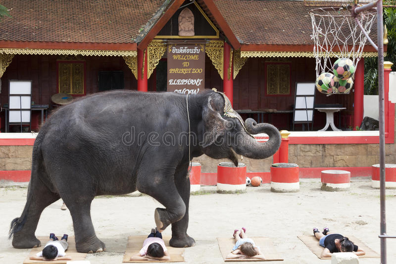 A series of multiple images Indian elephant steps over lying on the ground the children. Circus show Thailand, Phuket. Shots Indian elephant steps over lying on royalty free stock photography