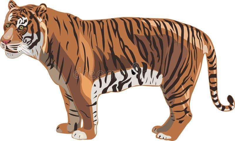 serii sumatran tygrys ilustracji