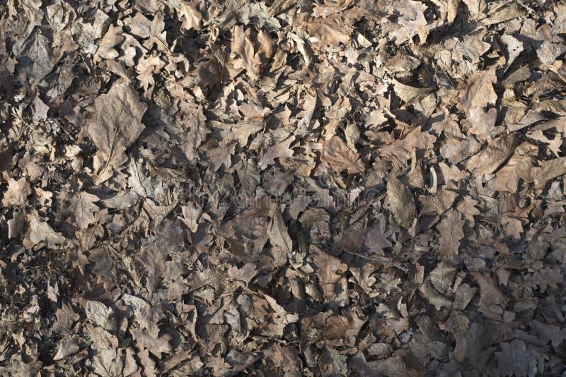 Seringue sur une feuille sèche dans les bois photos libres de droits