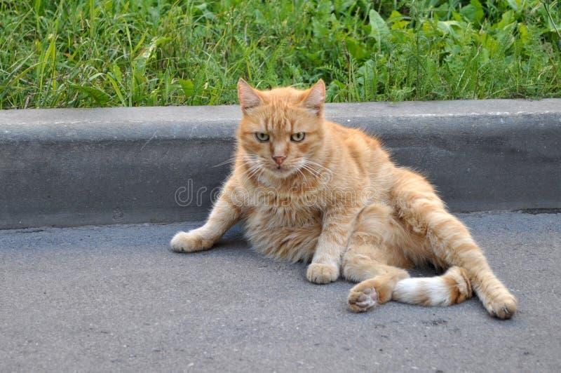 Serios-Katze, die auf einer Straße sitzt lizenzfreie stockfotografie