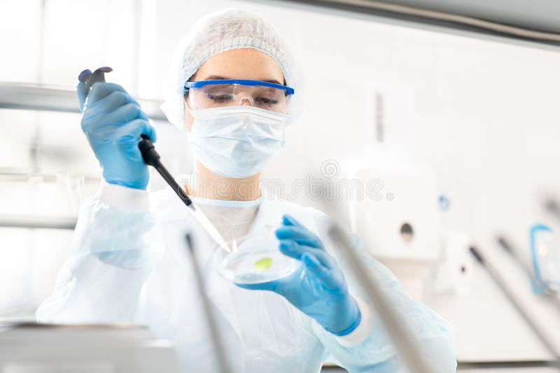 Studying microbiological sample stock images