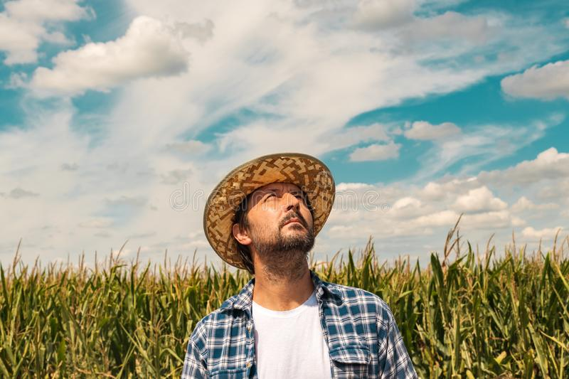 Serious corn farmer is looking up at the sky stock images