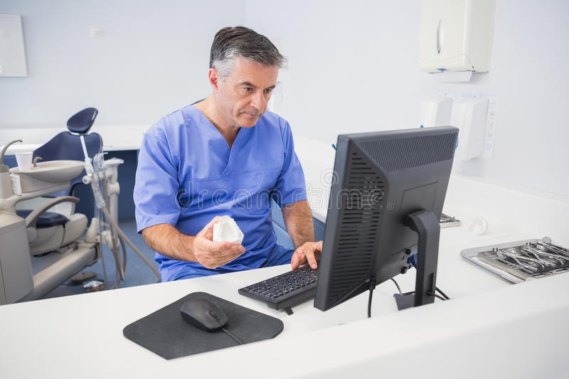 Serious dentist using computer and holding model royalty free stock image