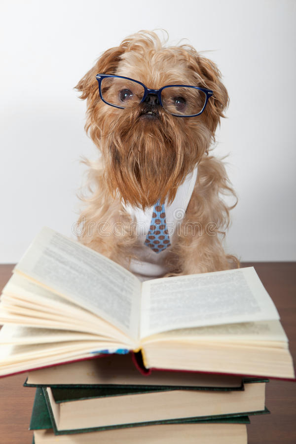 Download Serious dog in glasses stock image. Image of books, intelligent - 24276255