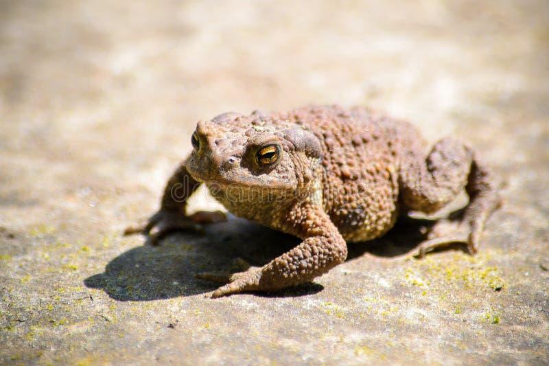 Serious frog stock photos