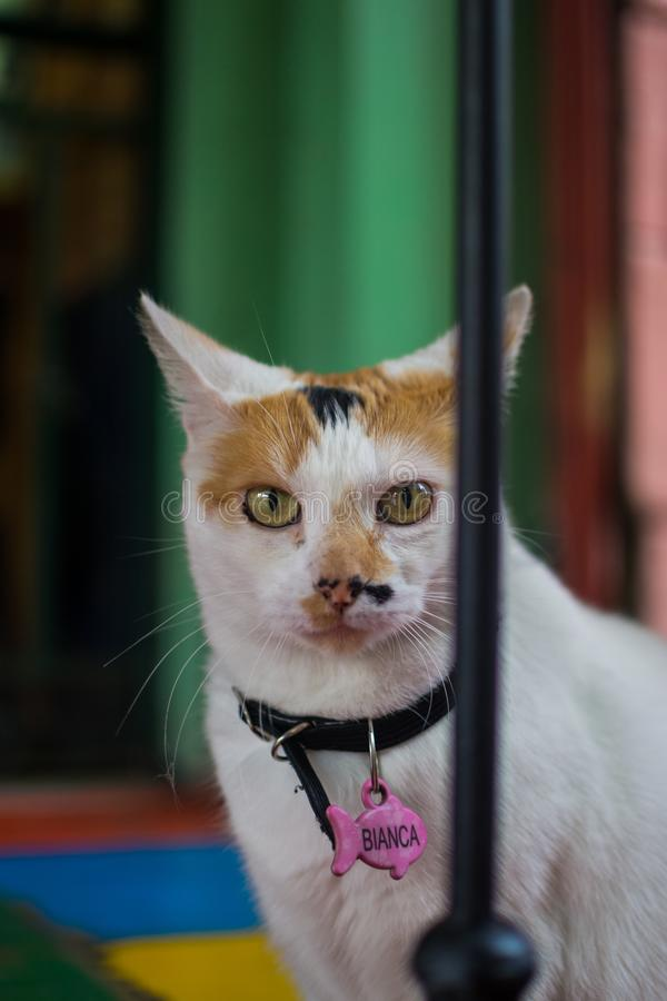 Serious look of a cat royalty free stock photography