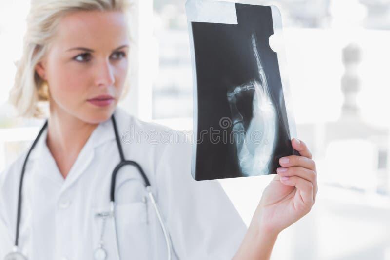 Download Serious Nurse Examining A Radiography Stock Photo - Image of nurse, fair: 31668814
