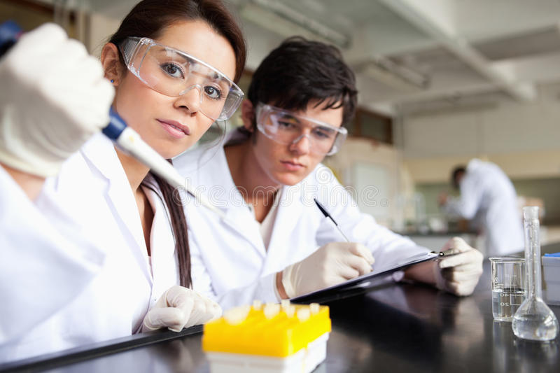 Serious scientists making an experiment. In a laboratory royalty free stock images