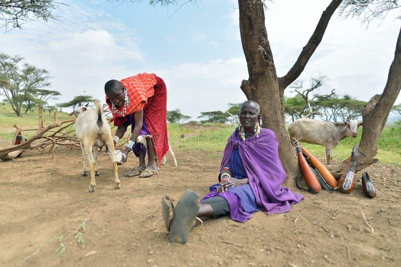Seronera, Tanzanie, le 12 février 2016 : La vie dans un village de Maasai photos stock
