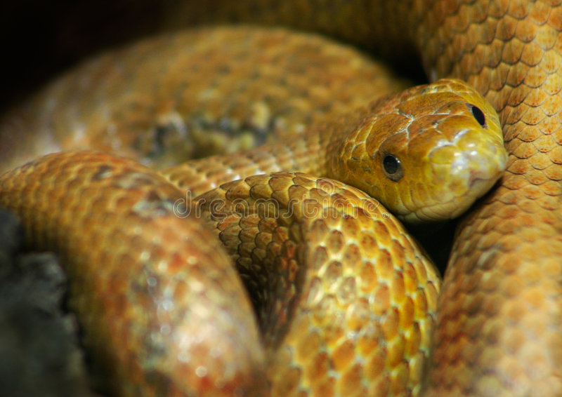 Serpent photo stock