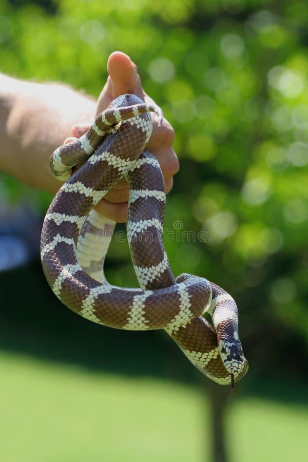 Serpent image stock