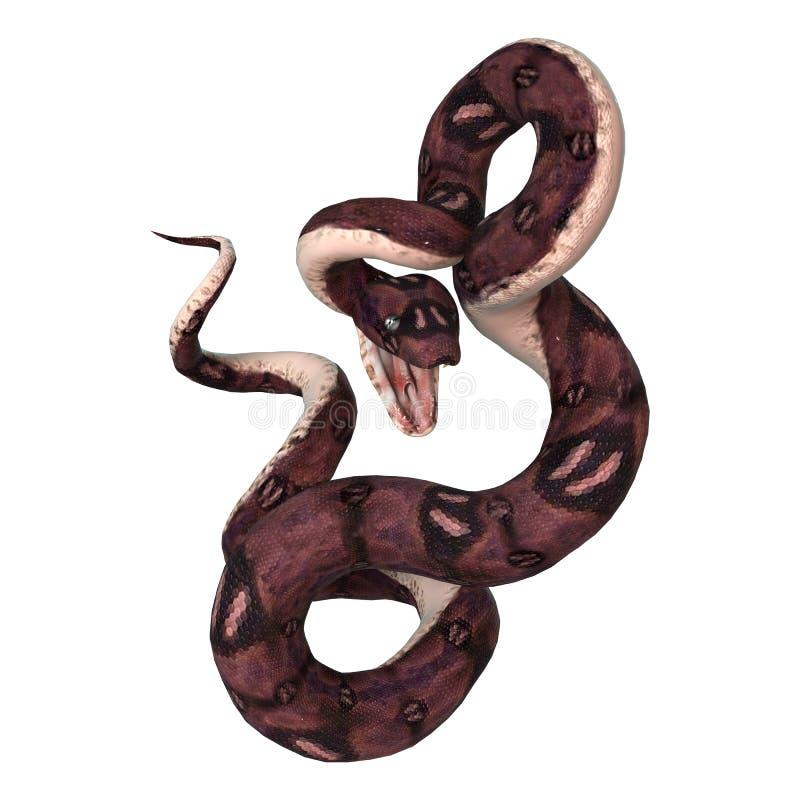 Serpent d'anaconda sur le blanc photos stock