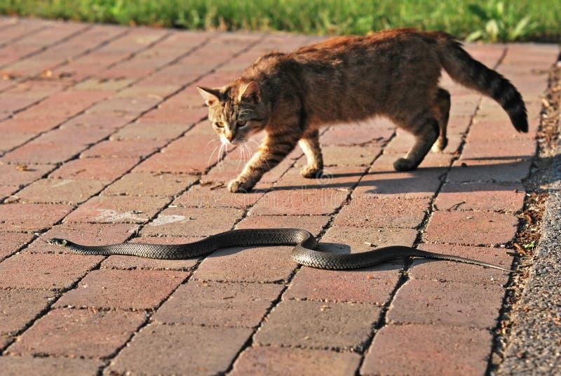 Serpent de chat et d'herbe image libre de droits