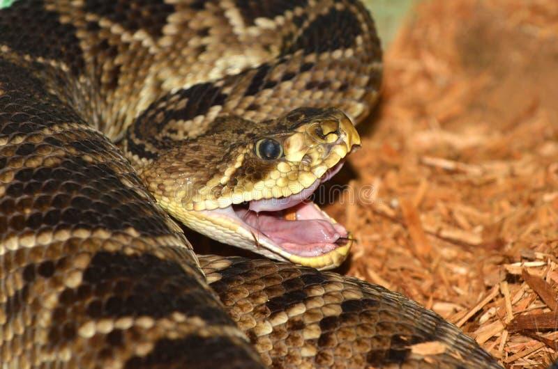 Serpent de ferraillement photographie stock