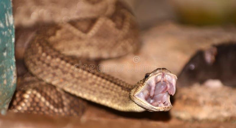Serpent de ferraillement photo libre de droits