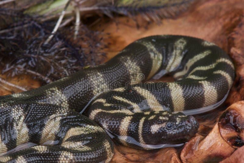 Serpent de fichier photographie stock