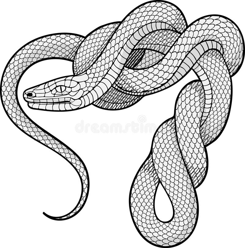 Serpent de Ttwisted Élément décoratif image libre de droits