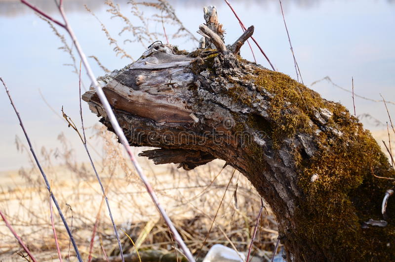 Serpent en bois photo stock