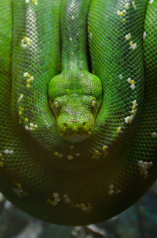 Serpent enveloppé photographie stock libre de droits