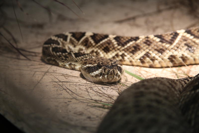 Serpent mortel images stock