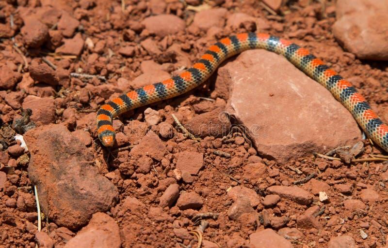 Download Serpent moulu occidental photo stock. Image du espèce - 45366774