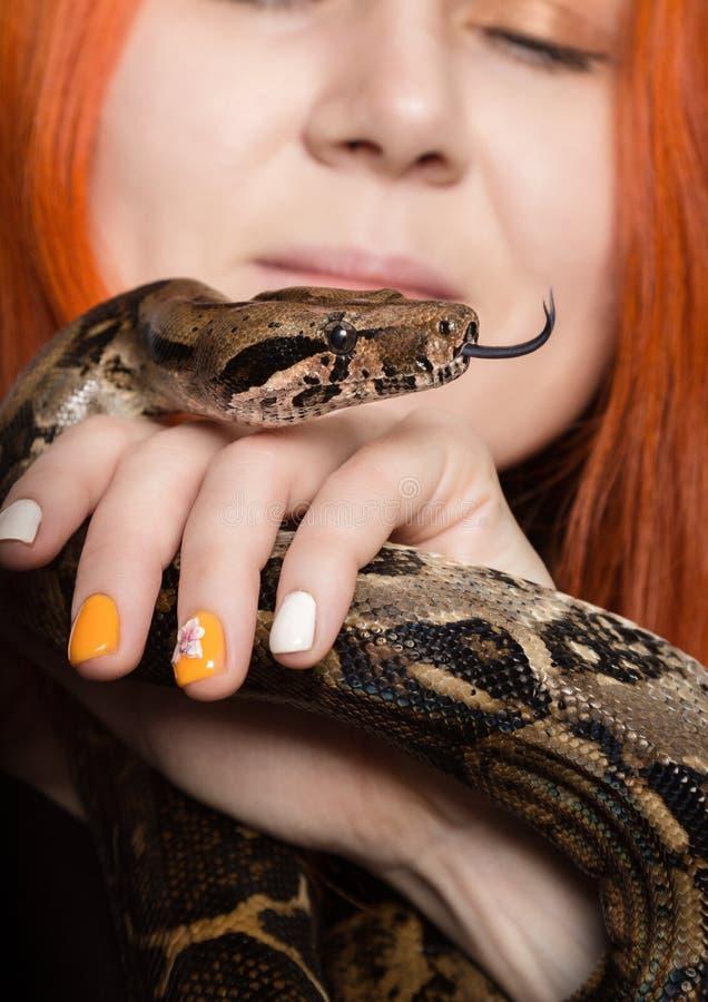 Serpent roux sexy de participation de femme fille en gros plan de photo avec le python pygméen sur un fond blanc photo stock