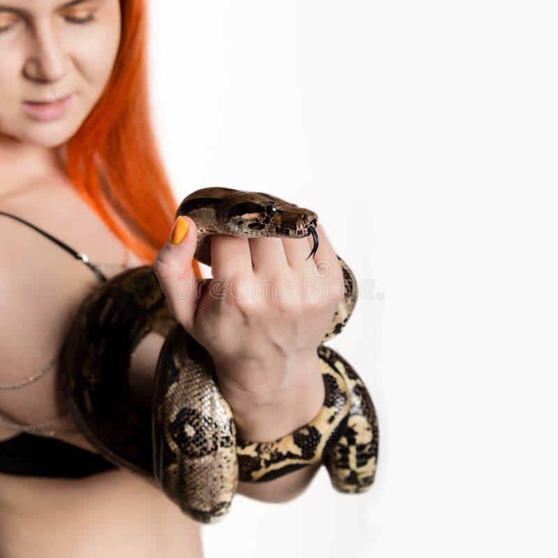 Serpent roux sexy de participation de femme fille en gros plan de photo avec le python pygméen sur un fond blanc photographie stock libre de droits